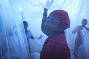 malaria6.jpg